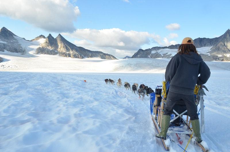 Summer Dog Sledding in Alaska