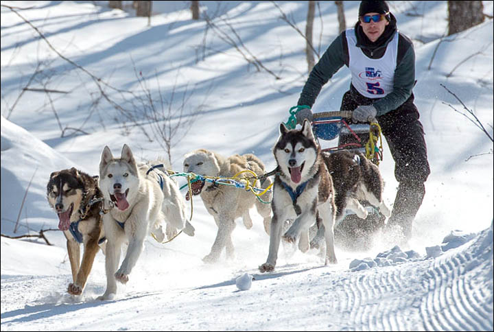 Know More About the Unique Dog Sledding Race in Alaska