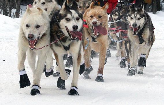 Unique Sports That Involve Dogs