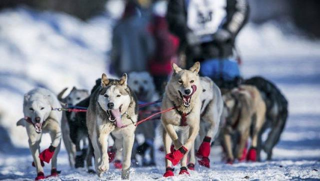 Try Dog Sledding Activity in Finland