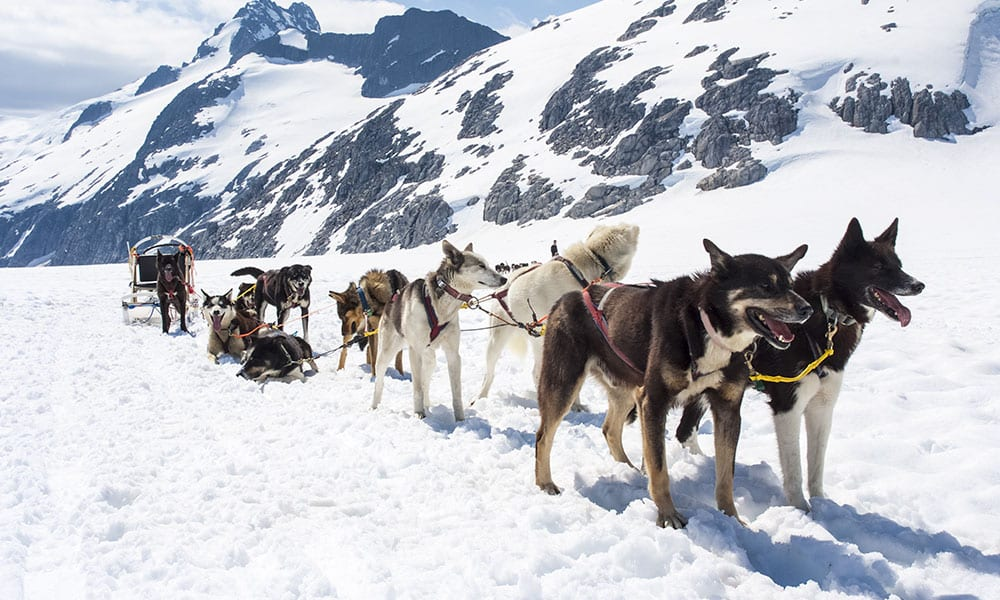 The Best Alaska Dog Sledding Tours That You Can Try