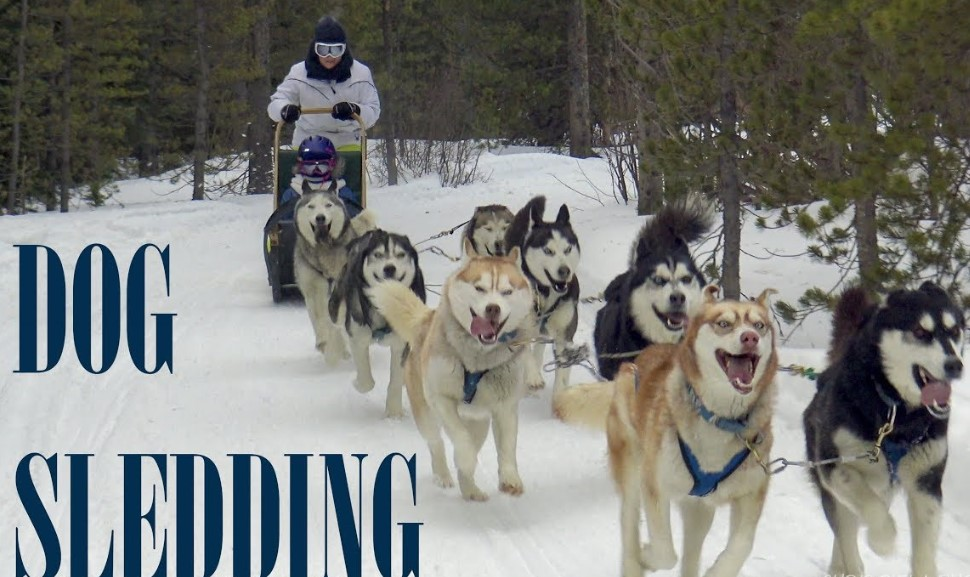 What is dog sledding